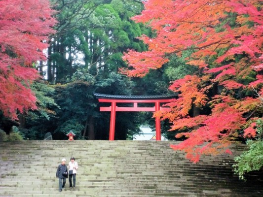 霧島神宮紅葉 (640x480)